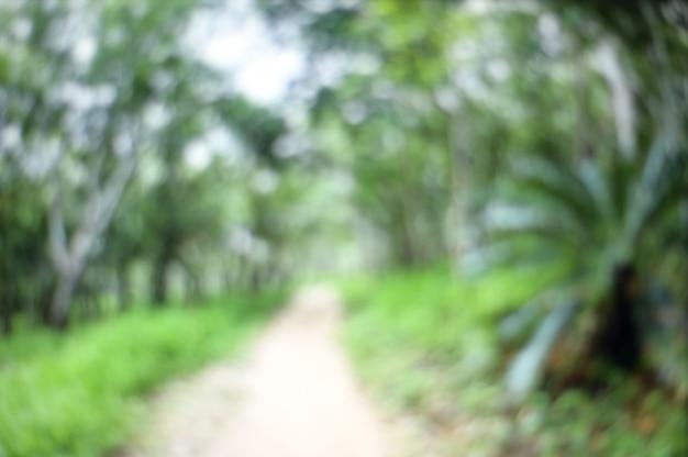 Fundo borrado sumário da floresta da fuga de natureza.