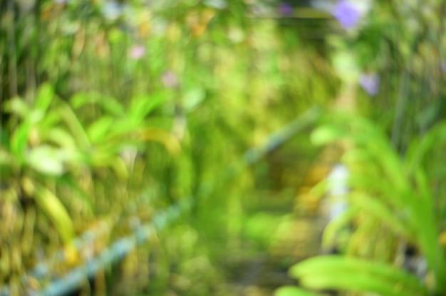 Fundo borrado sumário da orquídea da flor da natureza.