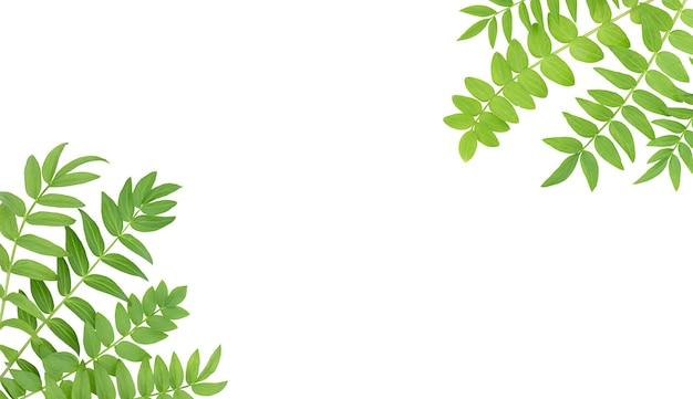 Fundo branco com folhas verdes isoladas nos cantos e espaço de cópia no meio