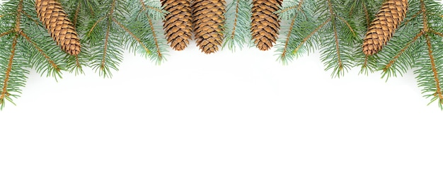 Fundo branco de inverno com cones e galhos de coníferas