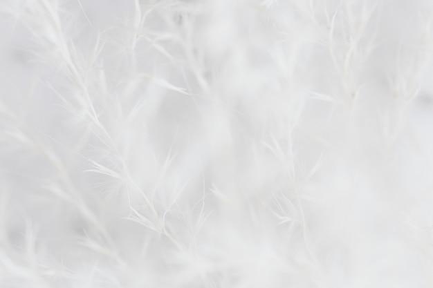 Fundo branco desbotado de grama seca