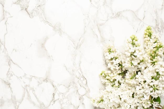 Fundo branco flores lilás