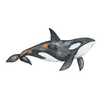 Fundo branco isolado de baleia assassina em aquarela, ilustração desenhada à mão de orca, animal subaquático