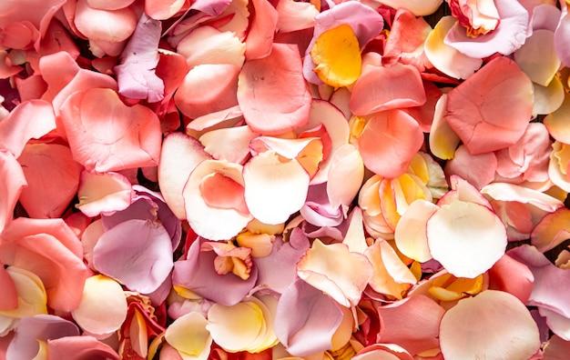 Fundo brilhante bonito de pétalas de rosa frescas.