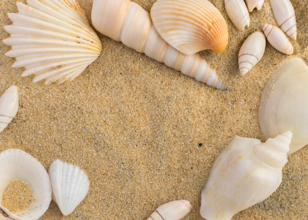 Fundo brilhante com diferentes conchas do mar e areia de coral