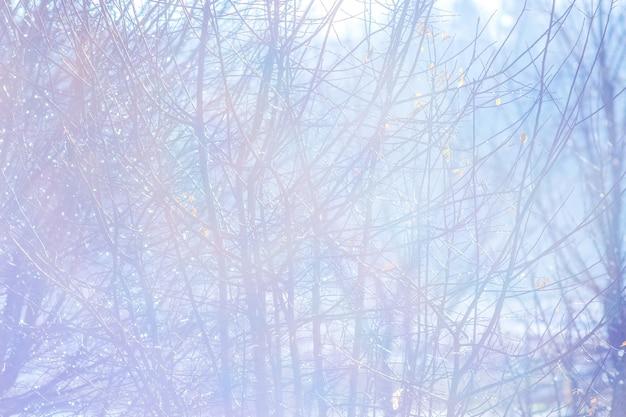 Fundo brilhante de inverno com galhos de árvores contra o sol_