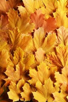 Fundo brilhante feito de folhas de outono