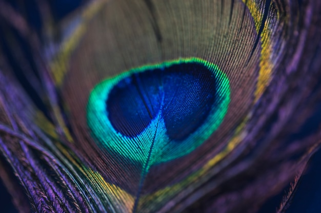 Fundo brilhante o padrão de uma pena de pavão