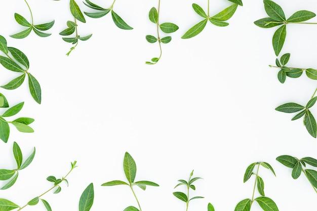 Fundo cinza de verão de folhas verdes