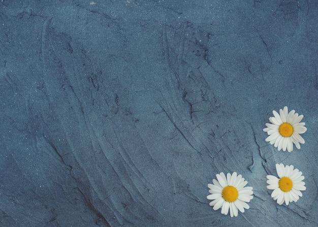 Fundo cinza floral com camomiles
