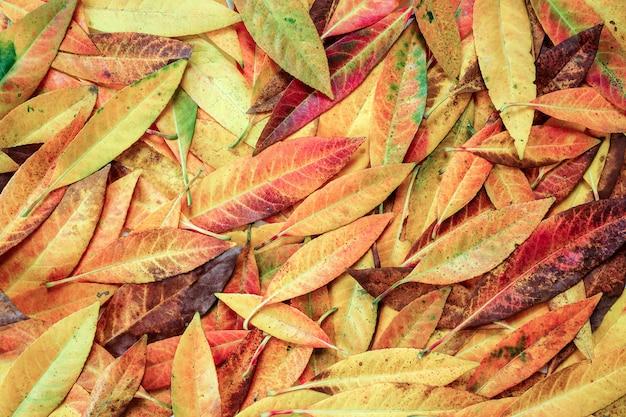 Fundo colorido abstrato das folhas de outono.