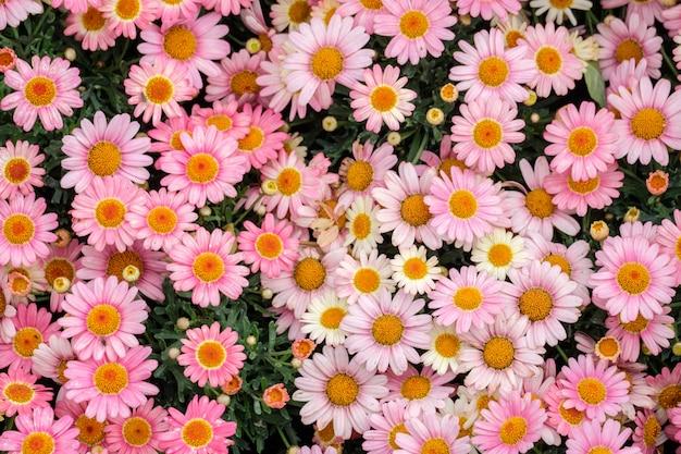 Fundo colorido da flor no jardim com efeito de estufa de verão