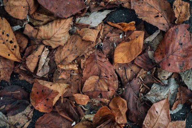 Fundo colorido da textura da folha