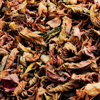 Fundo colorido das folhas de outono caídas.