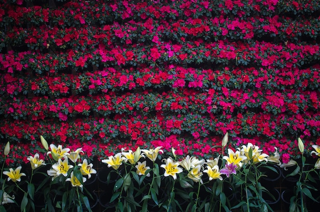Fundo colorido de flor