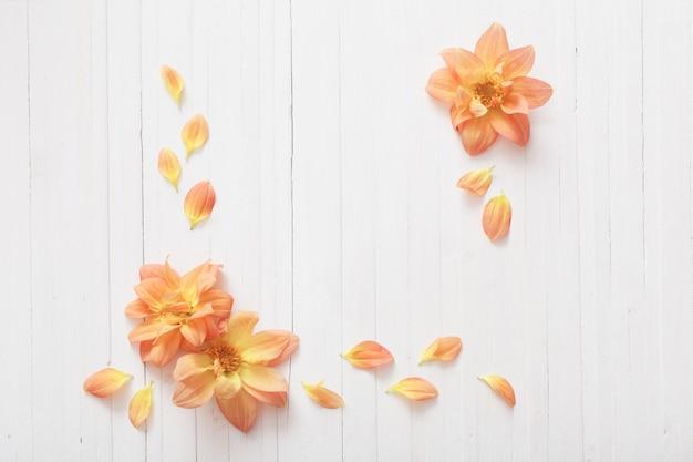 Fundo com dálias flores