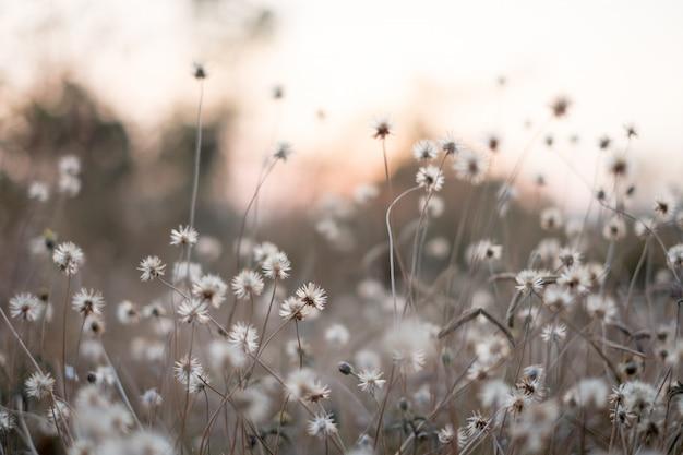 Fundo com ervas daninhas e magia da luz no crepúsculo no outono. pôr do sol