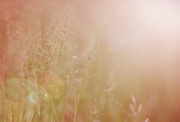 Fundo com flores do verão, campo de flor.