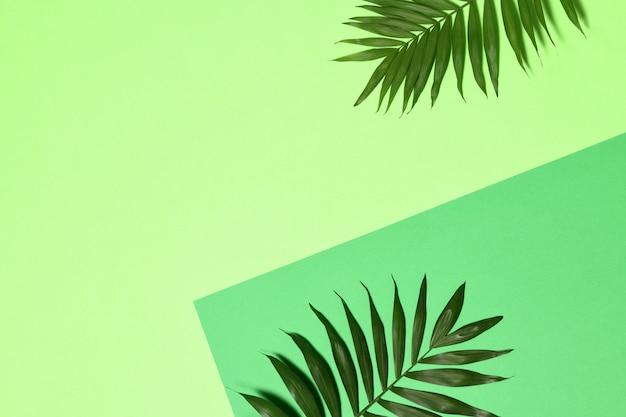 Fundo com folhas de palmeira