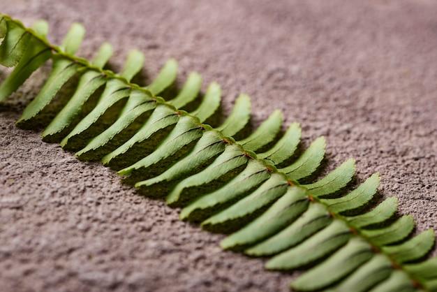 Fundo com folhas de samambaia verde.