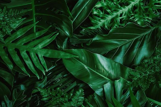 Fundo com folhas tropicais verdes escuras fundo plano fresco conceito de natureza plana lay