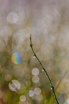 Fundo com gotas de grama de orvalho com efeito bokeh bonito