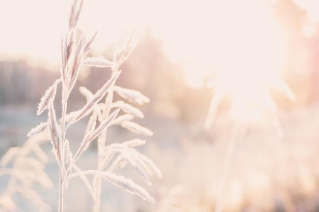 Fundo com grama, geada e sol.