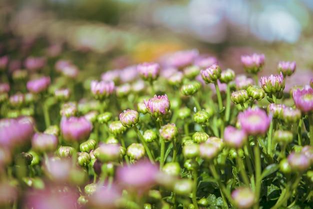 Fundo com lindas flores roxas