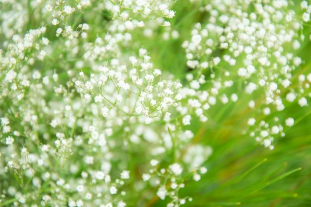 Fundo com pequenas flores brancas
