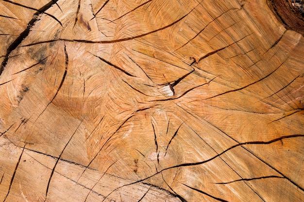 Fundo com textura de casca de troncos