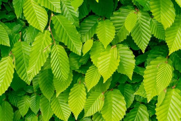 Fundo com textura de folhas verdes