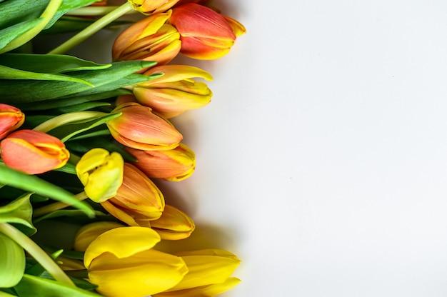Fundo com um buquê de tulipas amarelas, laranja e vermelhas. fundo branco.
