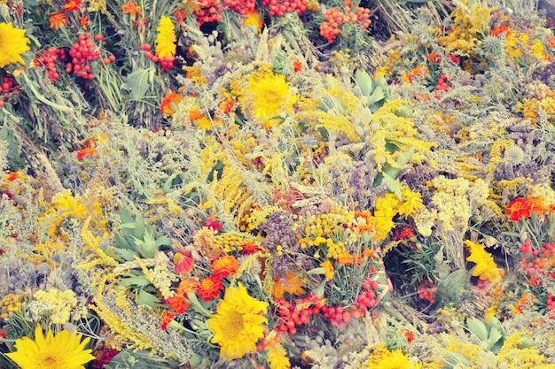 Fundo com várias ervas e flores desabrochando, com filtro