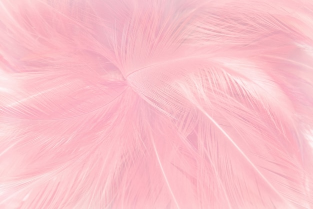 Fundo cor-de-rosa macio da textura das penas.