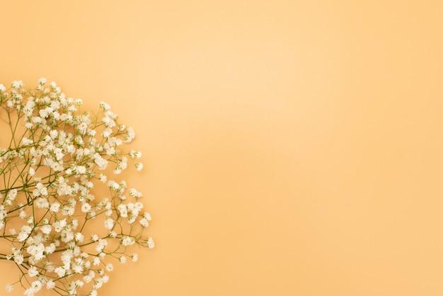 Fundo cor-de-rosa pastel bonito floral. flores pequenas brancas. flores gypsophila. flat lay, vista de cima, copie o espaço