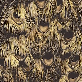 Fundo criativo abstrato das penas de pavão.