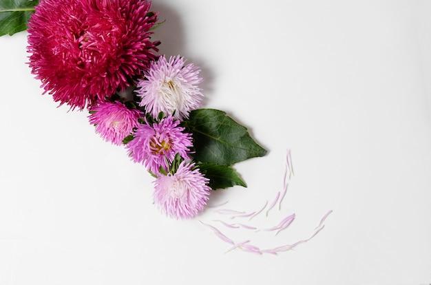 Fundo criativo com as flores do crisântemo e da dália. conceito de fronteira plana lay plana