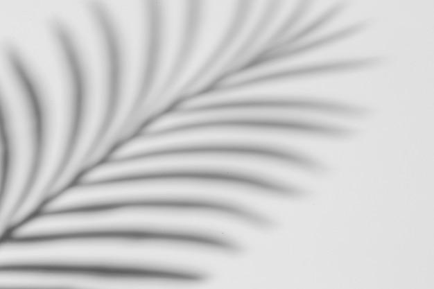 Fundo criativo de sombra de planta tropical no papel