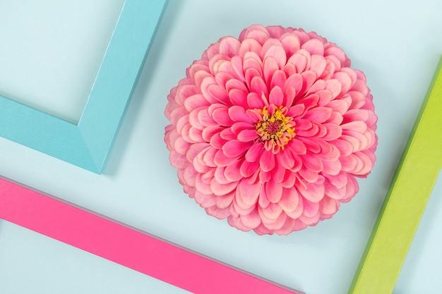 Fundo criativo feito de uma flor e molduras coloridas brilhantes.
