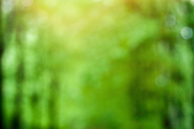 Fundo da floresta verde ensolarado turva