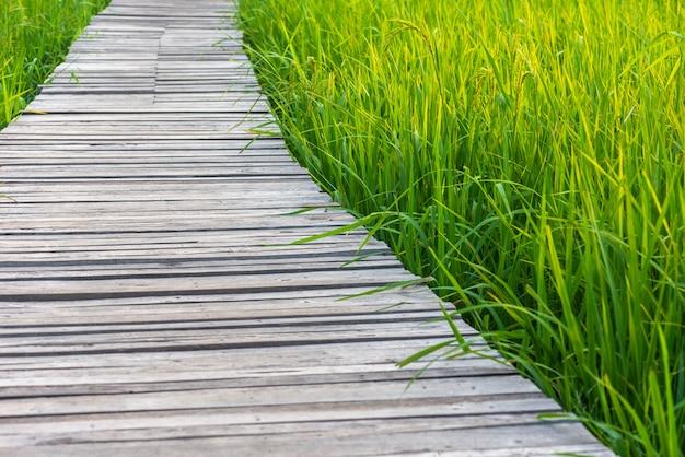 Fundo da natureza da ponte de madeira com arroz do campo na luz ajustada do sol.