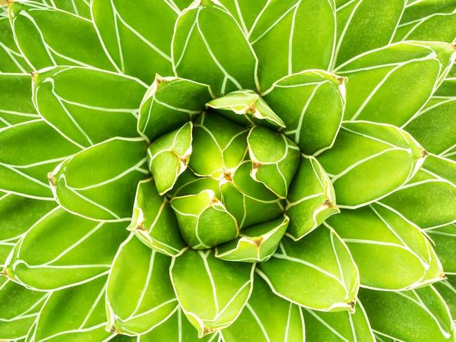 Fundo da natureza do padrão da planta verde