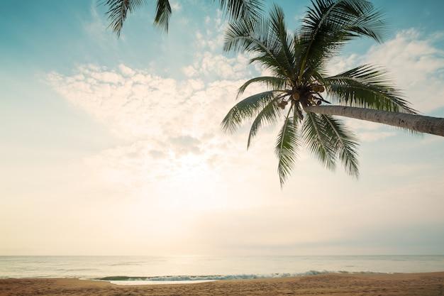 Fundo da natureza do vintage - paisagem da palmeira do coco na praia tropical no verão.