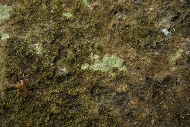 Fundo da parede de musgo na natureza