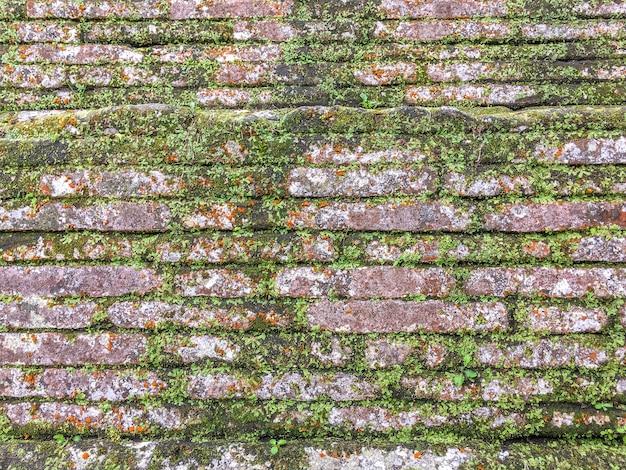 Fundo da parede de tijolo abandonada antiga velha coberta com o musgo e a hera verdes.