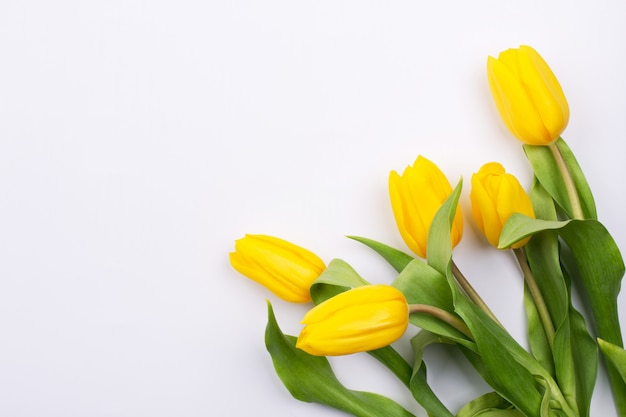 Fundo da páscoa com tulipson amarelo no branco. cartão para dia das mães. copie o espaço. configuração plana
