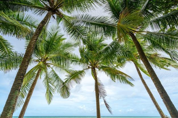 Fundo da temporada de verão incrível palmeiras de coco fundo tropical natural bonito bela natureza ou fundo do site de viagens.