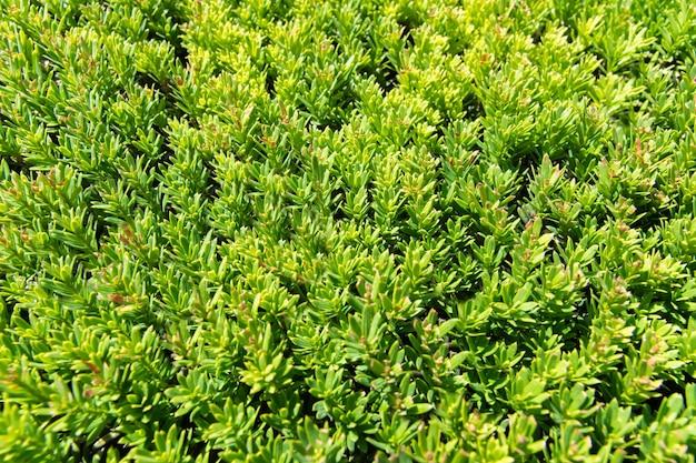 Fundo da textura da grama verde vista da grama brilhante no jardim.