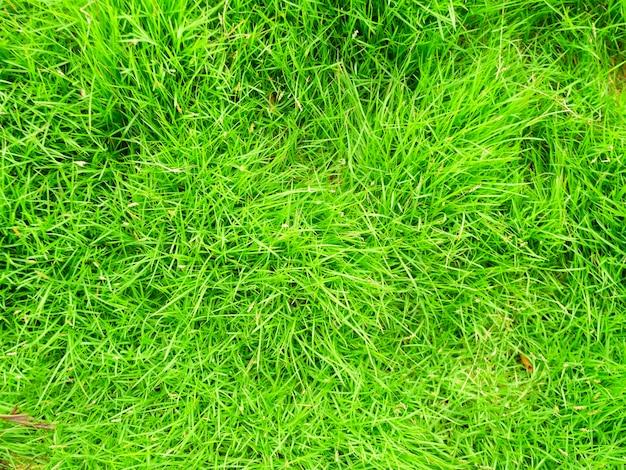 Fundo da textura da grama verde vista superior da grama brilhante fundo de uma grama verde
