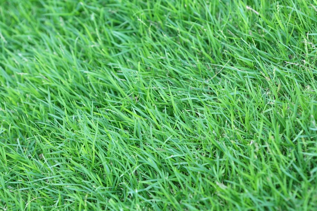Fundo da textura da grama verde.